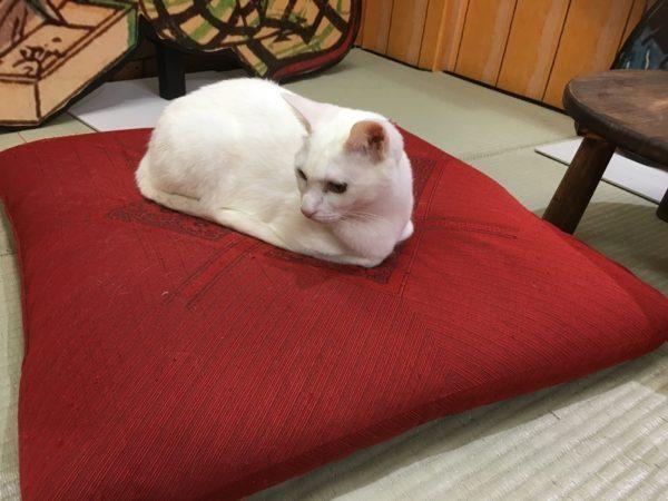 猫茶屋の白猫