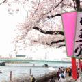 隅田川で屋形船を楽しんだ後は「墨堤さくらまつり」へ