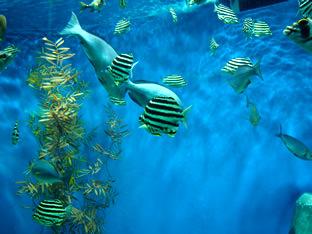 かわいらしい世界の海の魚たち