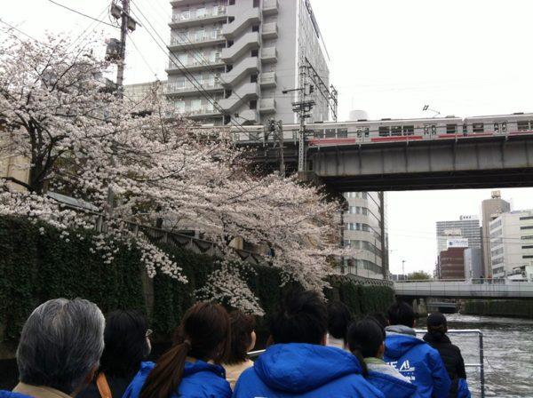 川から桜を楽しむ目黒川クルーズ