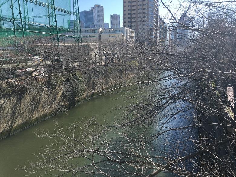 2021年2月8日の目黒川桜